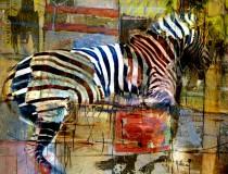 Zebra 2014-3